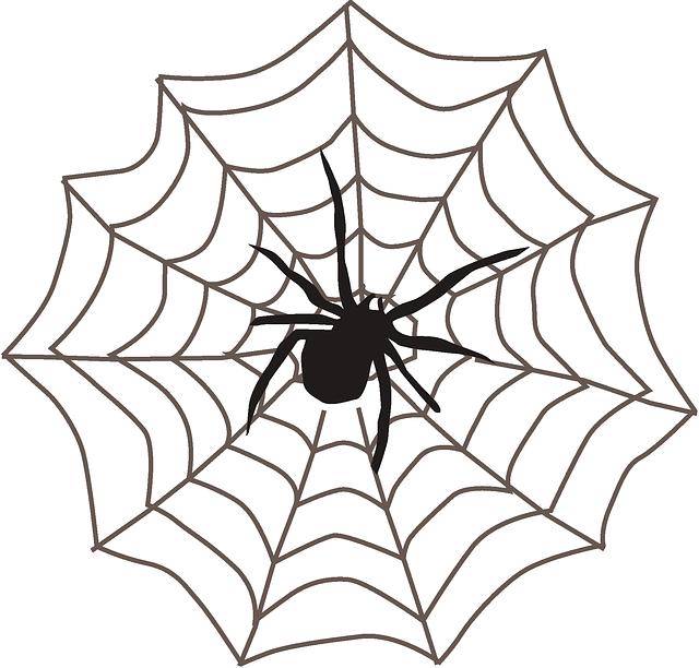 spider web black arachnid  u00b7 free vector graphic on pixabay