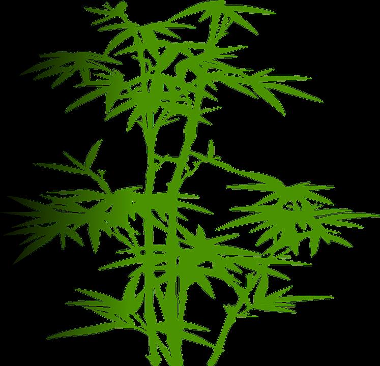 bambu tanaman hijau gambar vektor gratis di pixabay bambu tanaman hijau gambar vektor