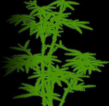 竹, 植物, 緑, 葉, 禅, 日本, 熱帯, ツリー, 中国語, アジア