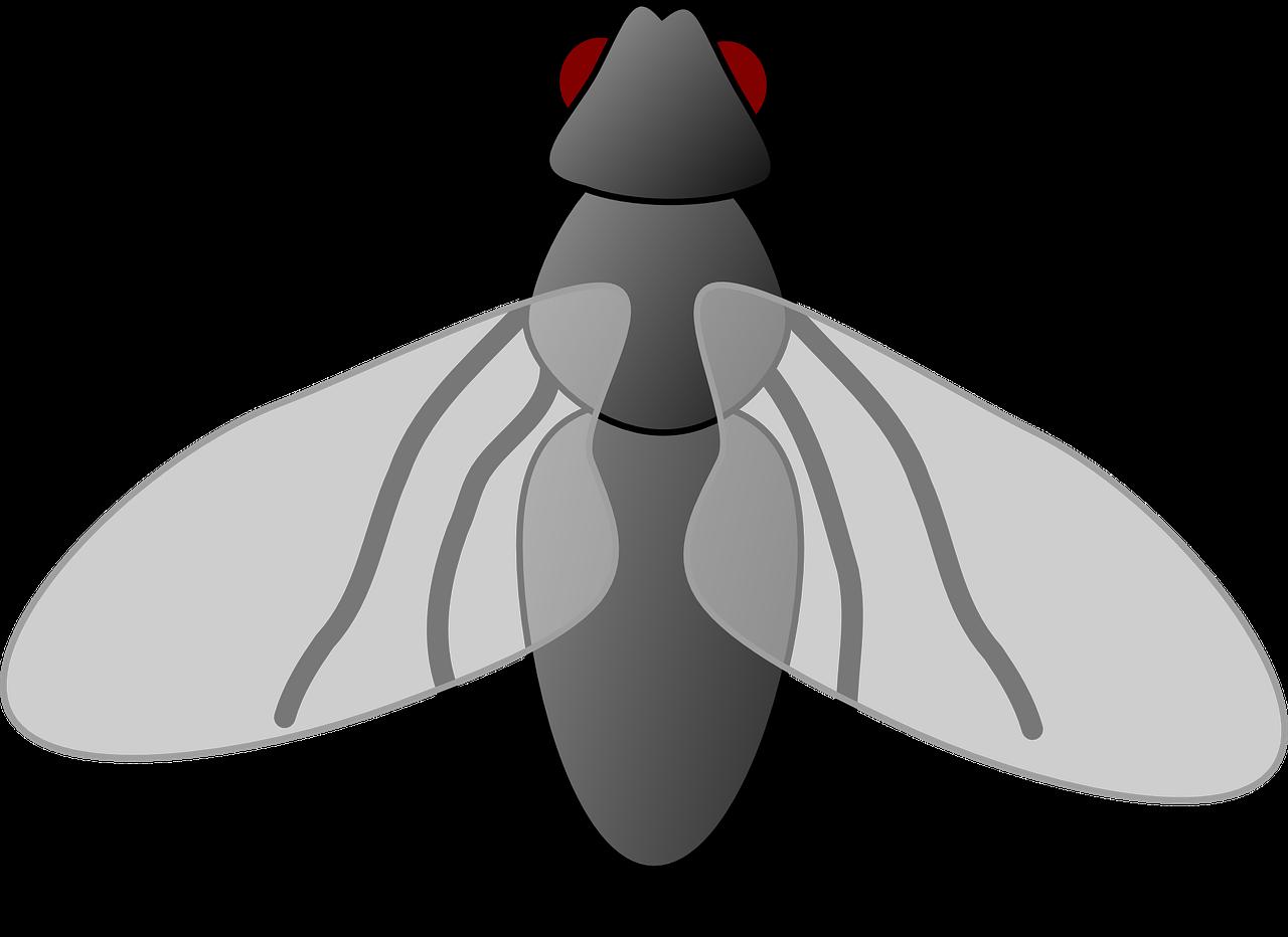 Картинка мультяшной мухи