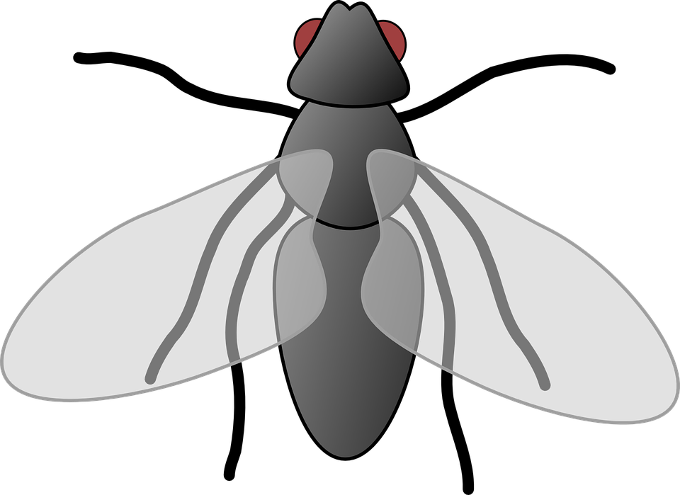 Free vector graphic: Fly, Cartoon, Isolated, Art, Insect ...Pet Penguin