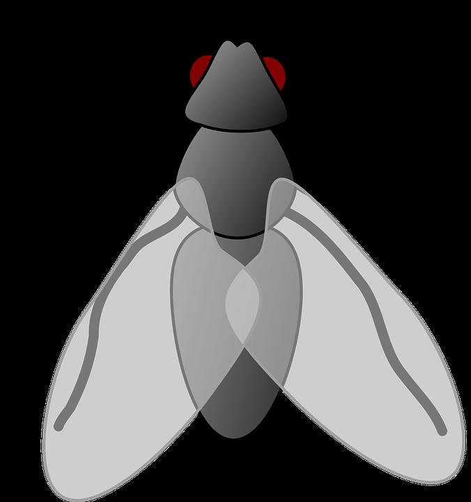 Mouche Dessin Animé Isolé - Images vectorielles gratuites sur Pixabay