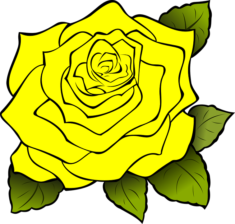 Rose Yellow Drawing Free Vector Graphic On Pixabay