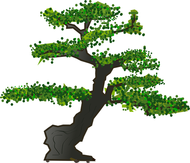 bonsai tree leaves 183 free vector graphic on pixabay