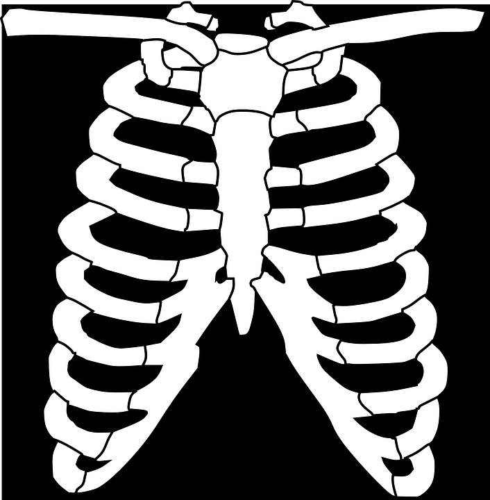free vector graphic: ribs, skeleton, human, bone - free image on, Skeleton