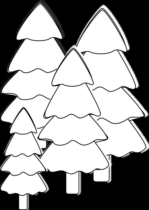Pohon Cemara Putih Gambar Vektor Gratis Di Pixabay