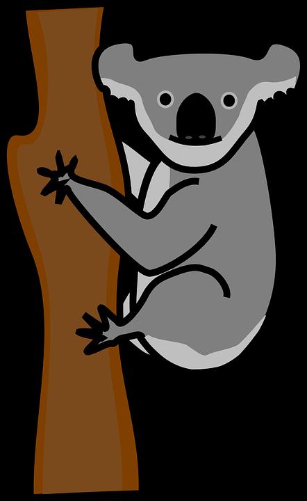 Koala, Ours, Des Animaux, Amicale, Montée, Arbre