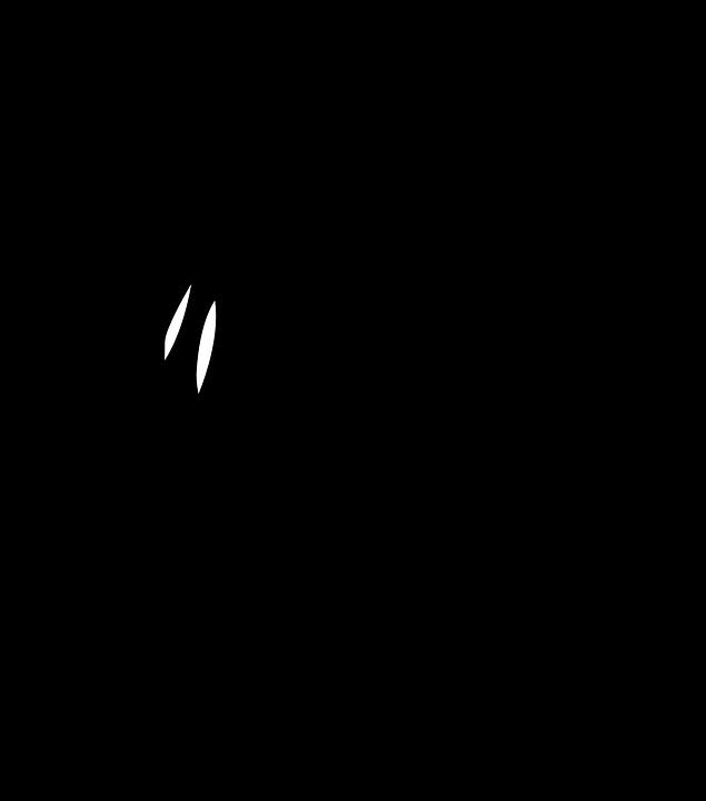 bkack kohúty čierna korisť zrelé