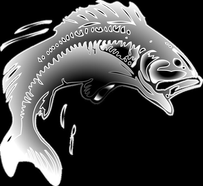Ikan Mas Melompat Gambar Vektor Gratis Di Pixabay