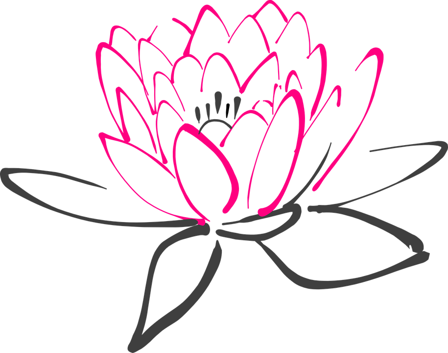 water lily flower pink free vector graphic on pixabay rh pixabay com