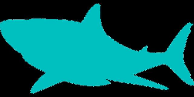 shark dangerous ocean 183 free vector graphic on pixabay