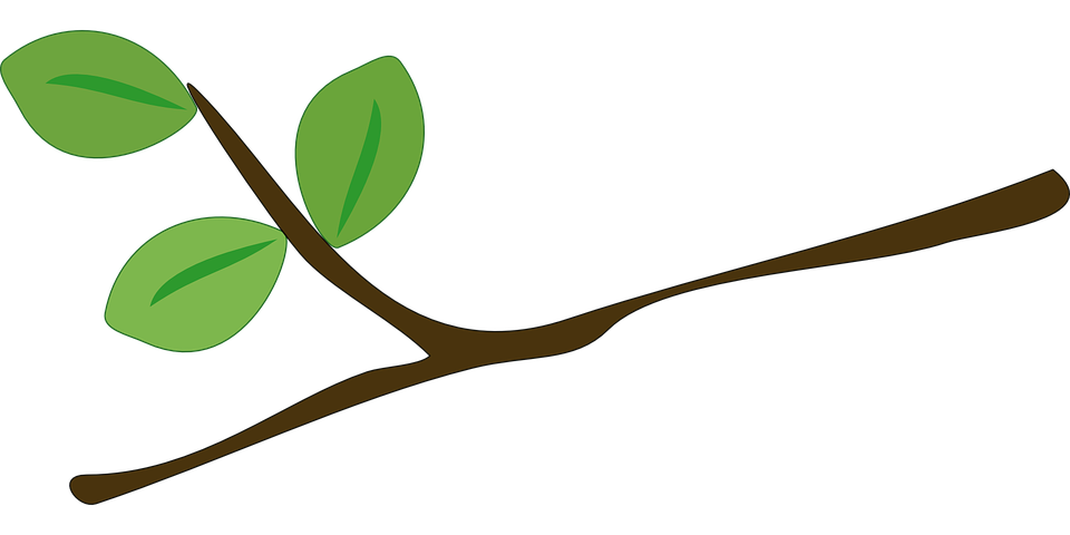 tree branch leaves free vector graphic on pixabay rh pixabay com branch vector images branch vector png