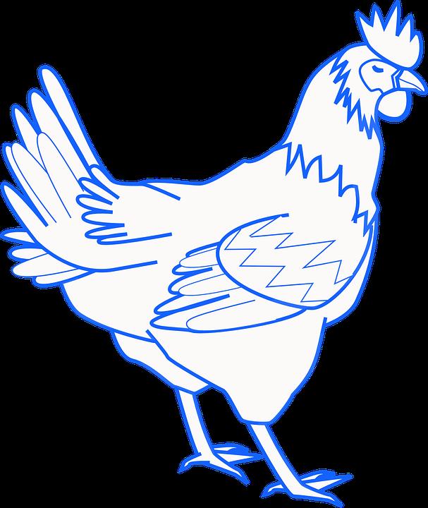 100 Gambar Ayam Dari Pensil HD