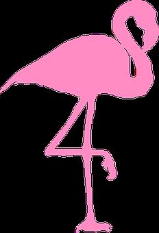 80 Free Flamingo Bird Illustrations Pixabay