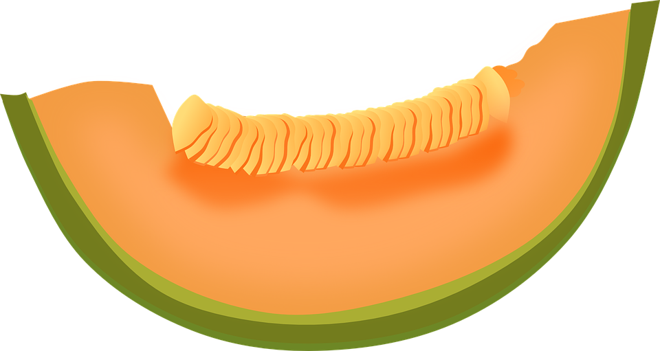 cantaloupe melon fruit free vector graphic on pixabay rh pixabay com lemon clip art images lemon clipart png