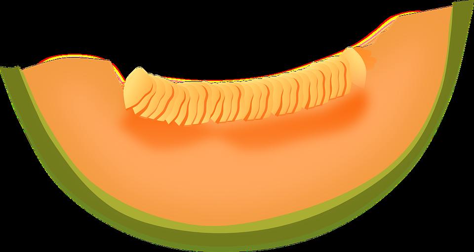 cantaloupe melon fruit free vector graphic on pixabay rh pixabay com melon clipart lemon clip art border
