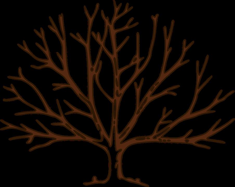 Vector gratis rbol desnudo invierno ramas imagen - Ramas de arboles ...