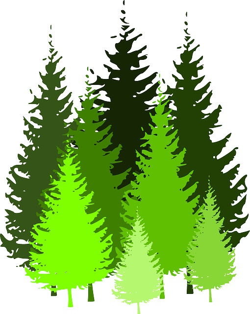 Forest Trees Clip Art Trees Conifers Conifer...