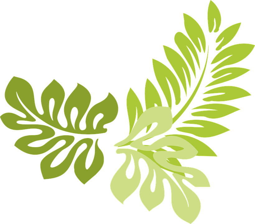 Free Vector Graphic Leaves Green Plant Flora Free