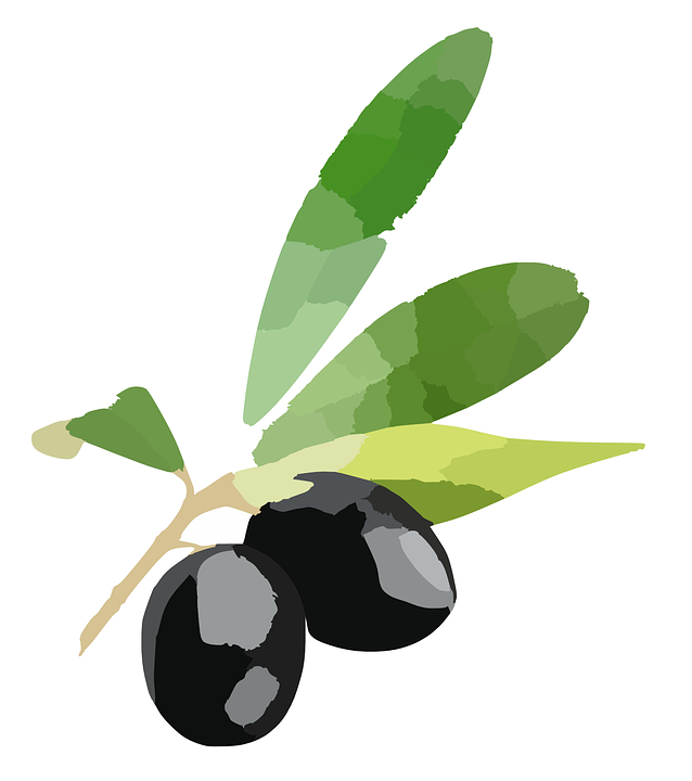 olives plum berries  u00b7 free vector graphic on pixabay