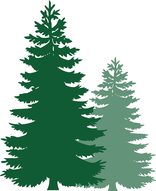 pine trees spruce evergreen free vector graphic on pixabay rh pixabay com pine tree vector graphic pine tree graphic art