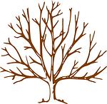 tree, leafless, denuded