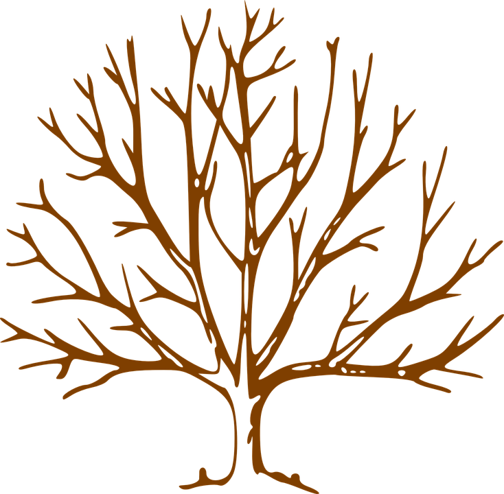 Árbol Sin Hojas Denudadas · Gráficos vectoriales gratis en Pixabay
