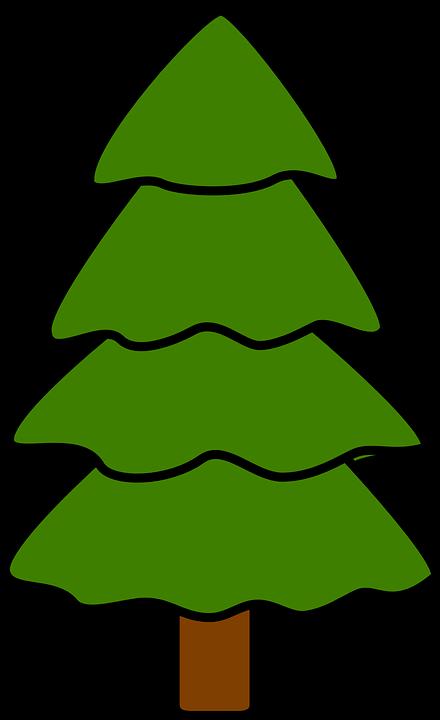 Arbre, Sapin, Pin, Épinette, Nature, Bois