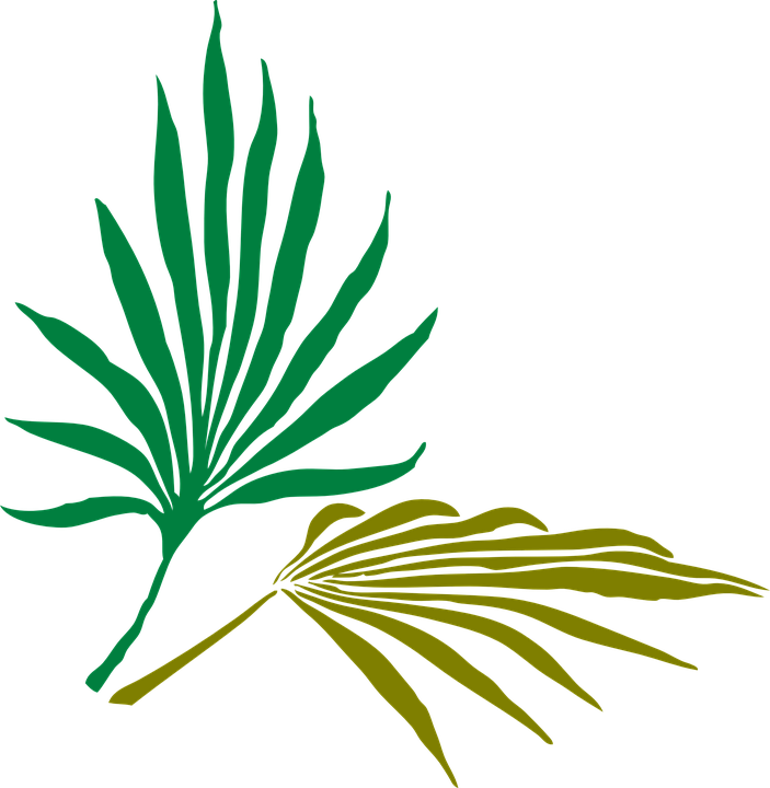 Palm Leaves Tropical · Free vector graphic on Pixabay