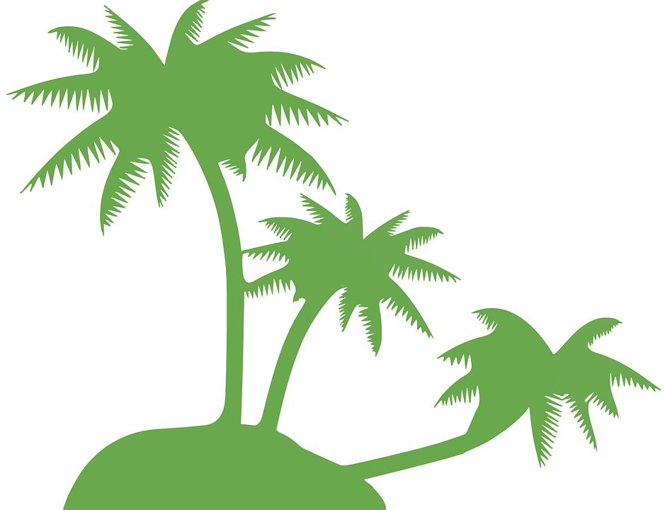 coconut palm tree trees free vector graphic on pixabay