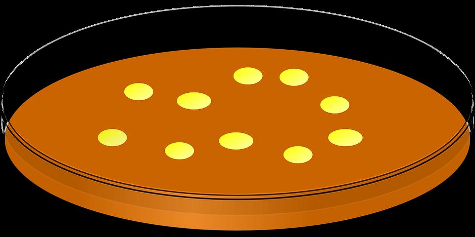 Petri Dish Bacteria Laboratory 183 Free Vector Graphic On