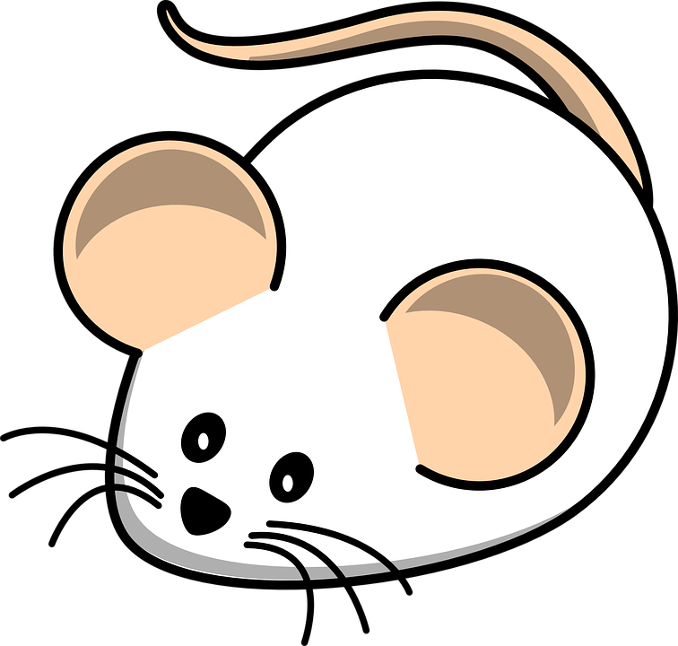 mouse-312012_960_720