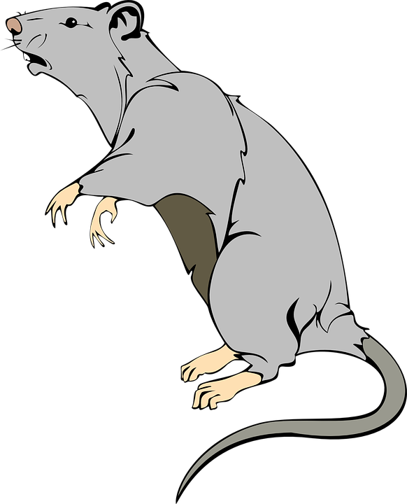 76+ Gambar Animasi Tikus Terlihat Keren