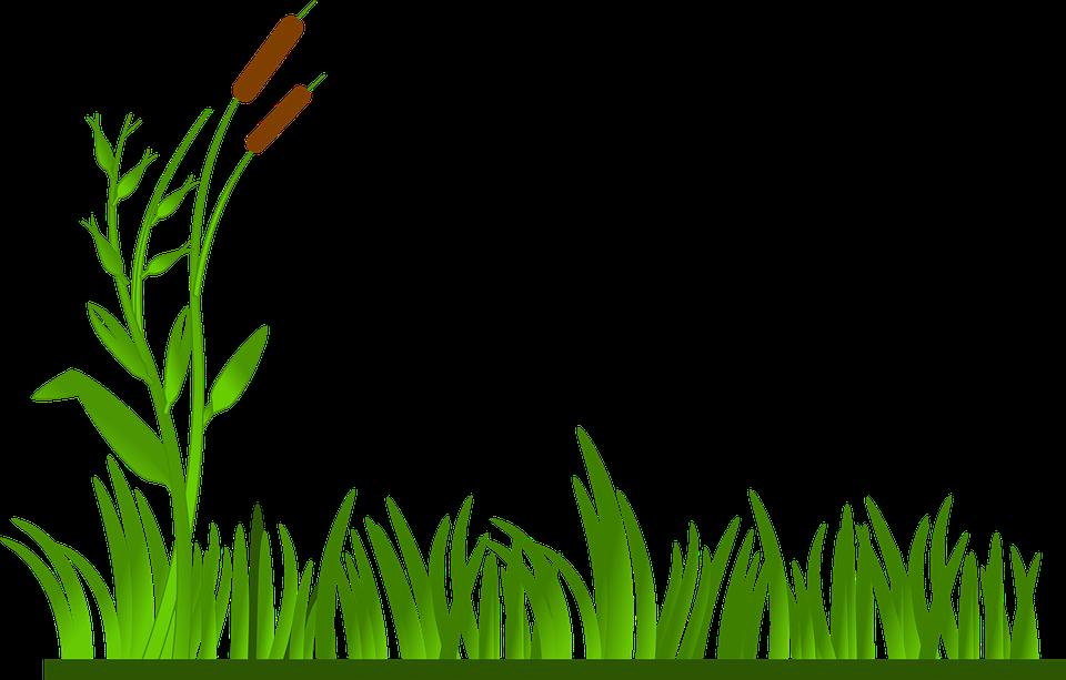 Erba Prato Verde Gatto O Nove Grafica Vettoriale Gratuita Su Pixabay