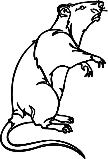 free vector graphic rat rodent laboratory rat pest