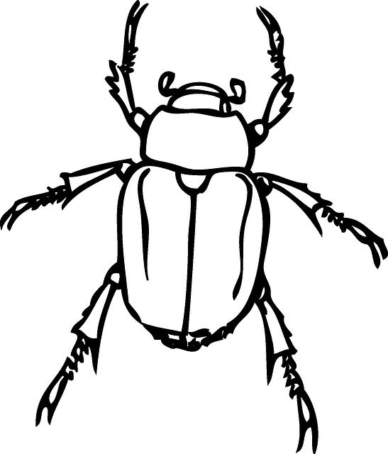 beetle japanese june bug  u00b7 free vector graphic on pixabay
