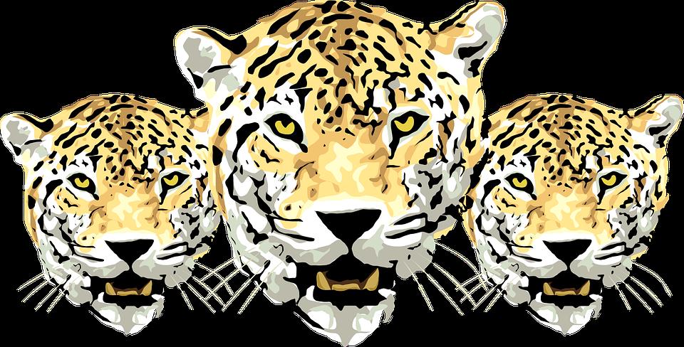 kepala macan tutul