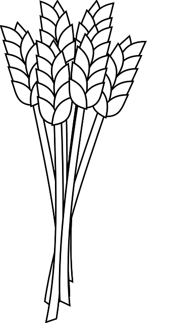 wheat grain agriculture 183 free vector graphic on pixabay