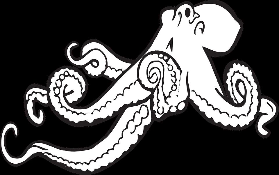 octopus sea animal free vector graphic on pixabay rh pixabay com