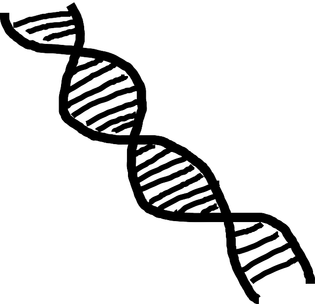 Free Vector Graphic Dna Double Helix Helix Science Free Image On Pixabay 312438