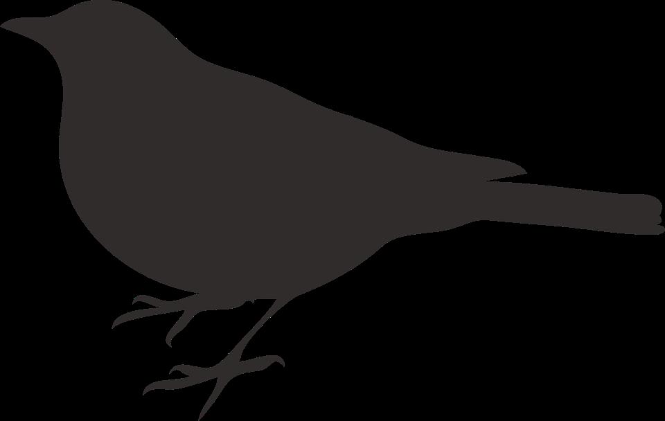 Bird Grey Dark Perched Silhouette Bir