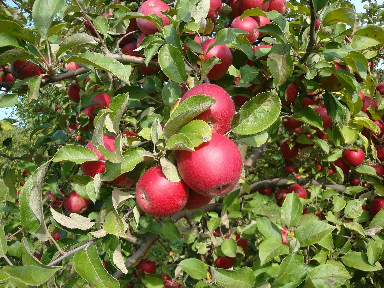картинка фруктового сада без фруктов друзьями