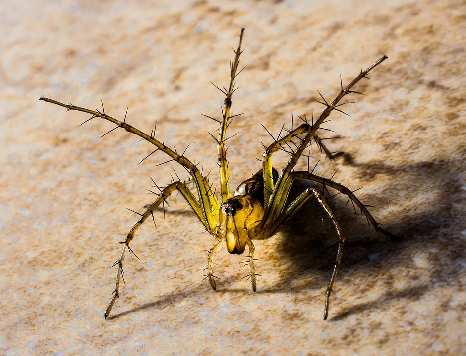 Free photo: Small Spider, Spider, Arachnids - Free Image ...