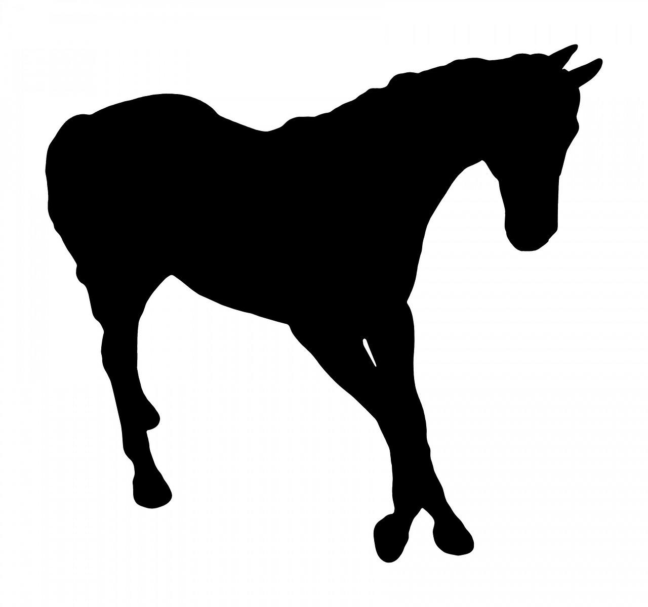 Horse Walking Free Image On Pixabay