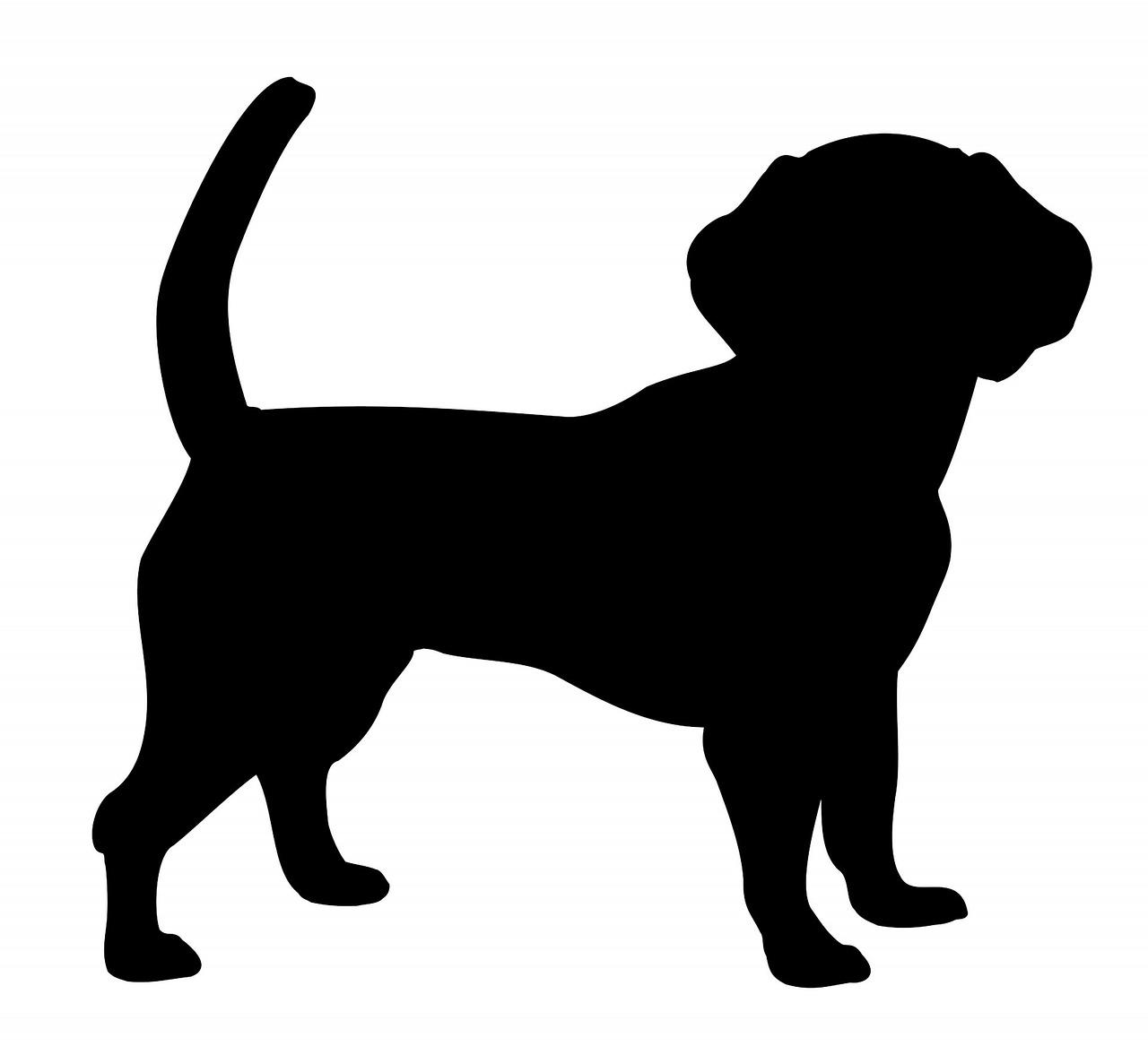фото картинка силуэт собаки на прозрачном фоне его
