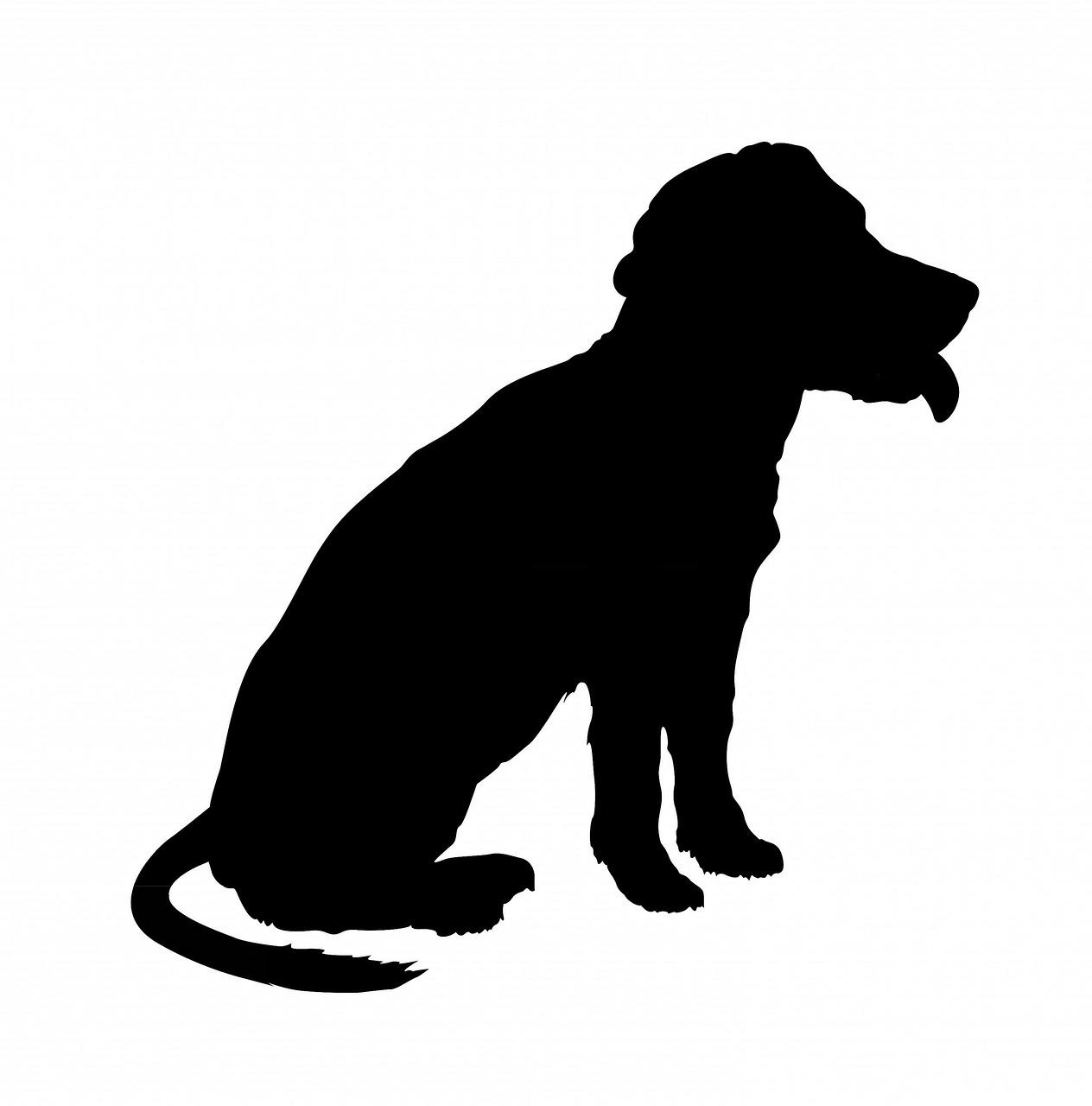 картинка силуэт собаки на прозрачном фоне дождь грозой, обрушившийся