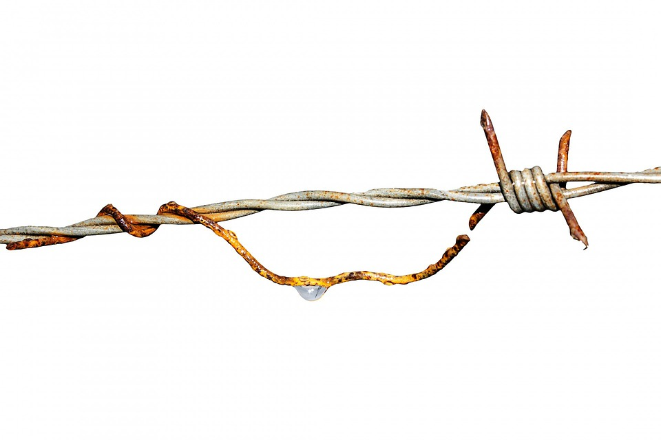 Free Photo  Barbed Wire  Iron  Skewer  Rust