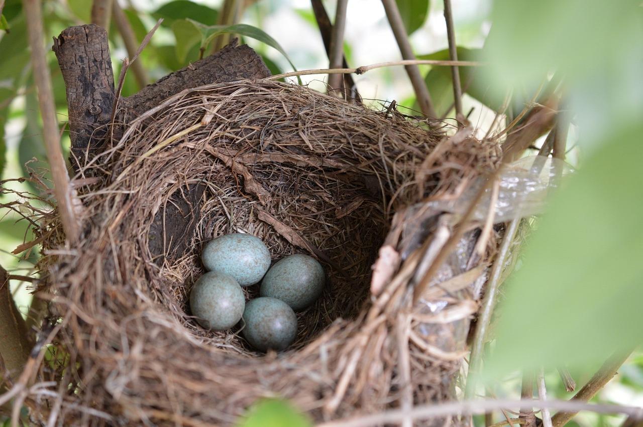 если гнездо птиц фото при его