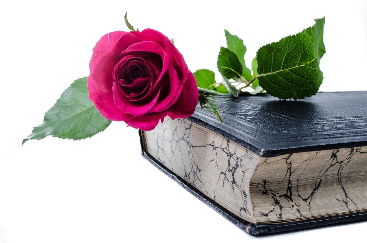 Flor Flores Rose - Foto gratis en Pixabay
