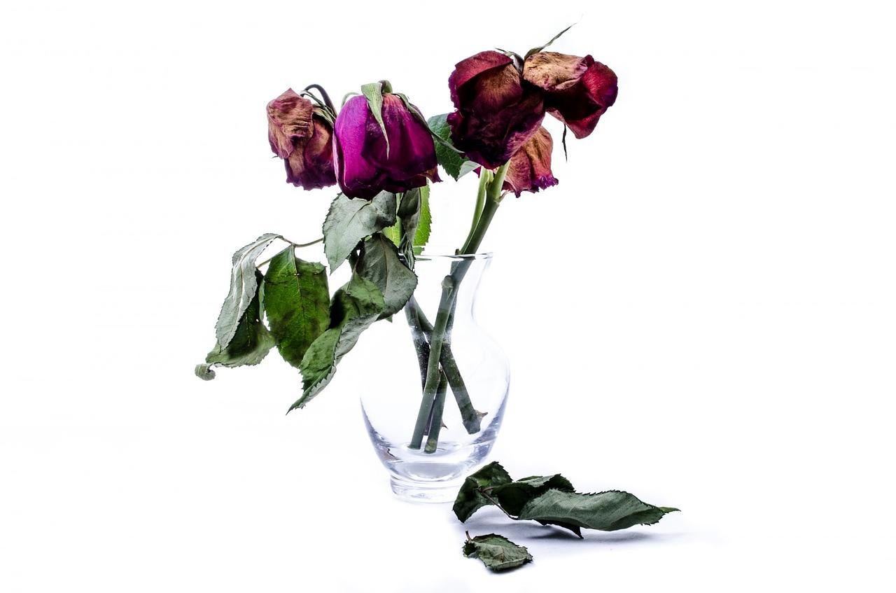 цветы завяли картинки стильных вариантов кожаных